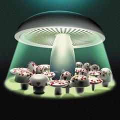 Radioactive Fungi