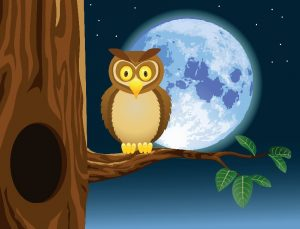 resized_resized_night-owl