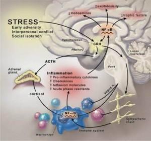 Stress Pathway