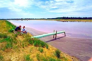 """Shoemaker: """"A huge problem in North Carolina, for pigs and chickens both, is that many of these lagoons now are full of cylindrospermopsis and microcystis. That adds to the inhalation of pigs of what's growing out in the lagoon."""""""