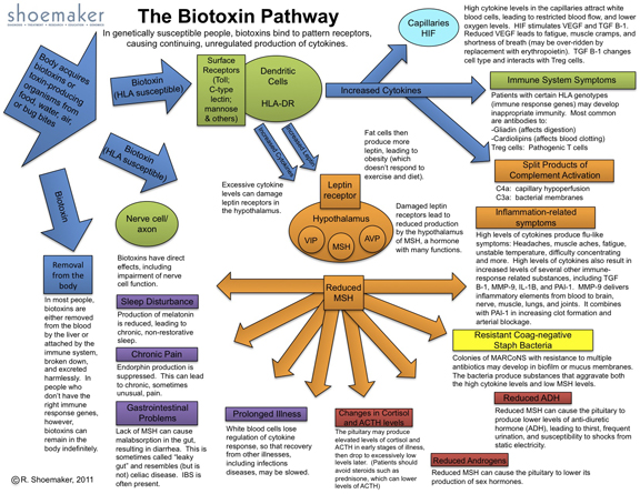 Biotoxin Pathway_3_29_2011_Jodi A. design